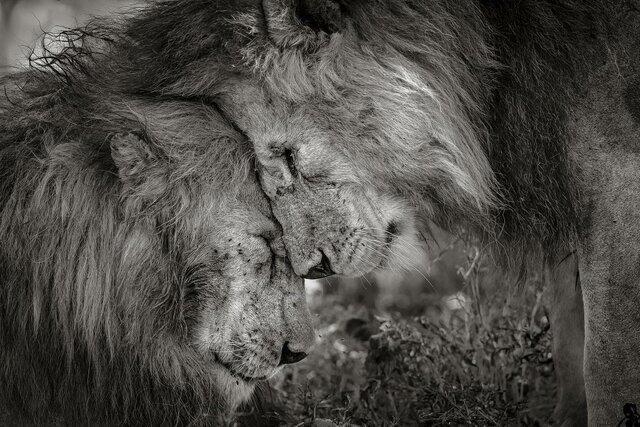 برندگان جایزه عکس حیات وحش معرفی شدند