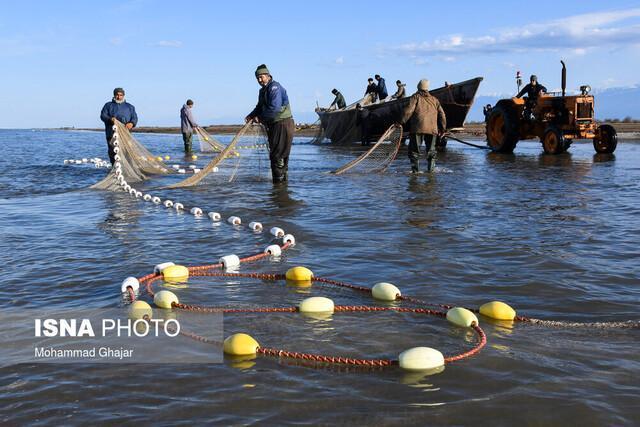 فردا آخرین روز صید ماهیان دریای مازندران