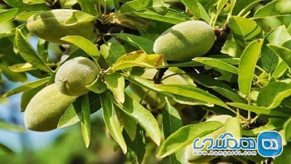 هر فرد بالغ در طول روز چند واحد میوه باید مصرف کند؟